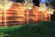 Creo Landscape Architecture San Francisco Garden Uplighting, Gardenista Make your garden an evening event. Landscape lighting not only extends the hours you can use outdoor living space, it also improves safety (you can see whe Front Yard Fence, Farm Fence, Backyard Fences, Backyard Landscaping, Patio Fence, Low Fence, Backyard Trees, Small Fence, Fence Garden