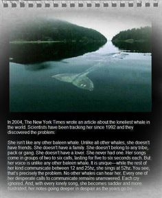 This is actually true and they think she or he is a mutant blue whale or a new species, possibly deaf.
