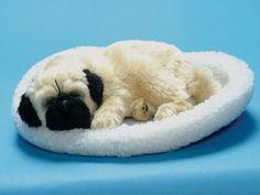 Furry Animal Kingdom Handmade Synthetic Breathing Dog - Pug DB772