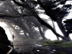 ***** POINT REYES - UN PAISAJE DE TERROR ********    Point Reyes, California, cerca de la cima del acantilado, bajo la niebla. Los árboles azotados por el viento formando una especie de túnel, la perforación de sol a través de la capa superior de la niebla y la visibilidad limitada de proporcionar un efecto muy especial. Se parece bastante irreal. Tipo de espeluznante, sobre todo teniendo en cuenta que circula poca gente alrededor.         Fotografía de Anton Barmettler,