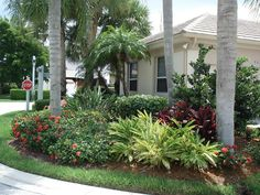 small front yard landscape with palm trees | landscaping
