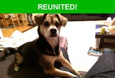 Great news! Happy to report that Remy has been reunited and is now home safe and sound! :)