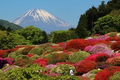 Mt Fuji from Odakyu Yamano Hotel - Hakone