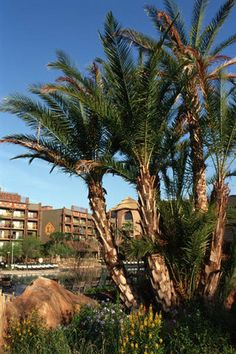 Beautiful landscaping at Disney's Animal Kingdom Lodge at the Walt Disney World Resort in Florida.