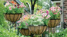 Não Perca!l Impressionante! Das paredes ao teto, lindos jardins suspensos - # #dicasdedecoração #jardim #jardimvertical