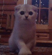 funny-gif-cat-cute-big-eyes-attack