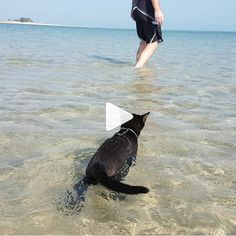nathan_thebeachcat   Can't get enough of her, she's one powerful swimmer!