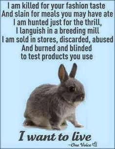 Stop animal abuse! Abuse comes in many forms. Stop Animal Testing, Stop Animal Cruelty, Mon Combat, Vegan Animals, Wild Animals, Baby Animals, Why Vegan, Animal Welfare, Vegan Lifestyle