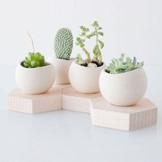 #succulents #style
