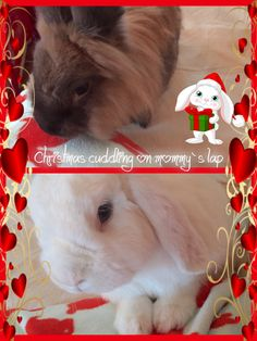 Hi everyone!! It´s Christmas Morning and we´re cuddling with mommy!! ( Psssssstttt do you notice she´s having bunnies on her bathrobe - not us but some red funny ones ? The lady is crazzzzzy.....) Thihihihihi  Duncan and Dexter on D&D by Inger Johanne 12/2015 :)