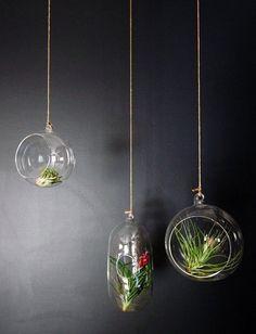 cute hanging air plant terrarium ideas glass orbs