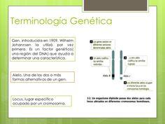Terminología GenéticaGen, introducida en 1909, WilhelmJohannsen la utilizó por vezprimera. Es un factor genético(una regió...