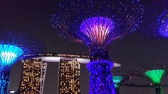 Garden by the bay - Singapore #singapore #travel