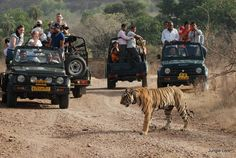 Golden Triangle Tour with Wildlife Experience in Ranthambore  The Golden Triangle travel circuit is one of the most preferred travel routes that travelers and globetrotters from all parts of the world wish to explore once in their life. The circuit that got its name from the triangular shape formed by the three destinations of New Delhi, Agra and Rajasthan offer an extraordinary experience to travelers.