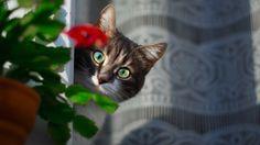 """Cat - <a href=""""http://alyabev.com"""">ALYABEV.COM /</a>/ <a href=""""https://www.facebook.com/AlyabevRoman"""">FACEBOOK</a> // <a href=""""https://www.instagram.com/alyabev_photo/""""> INSTAGRAM</a>"""