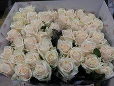 #Rose #Rosa #Myllena; www.barendsen.nl