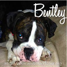 Bentley has been adopted