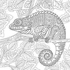 Zentangle стилизованный хамелеон — стоковая иллюстрация #104877108