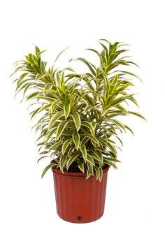Planter Pots, Interior Design, Nest Design, Home Interior Design, Interior Architecture, Interior Decorating, Plant Pots, Design Interiors, Home Improvement