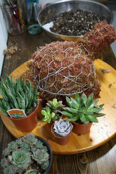 I decided it was time for a topiary mini turtle. Fred, my other turtle, is adorable, but just a little to big for the house. And what better project to launch my new craft space? Let me tell you, having a designated spot to work on my projects is a dream! I was able to … … Continue reading →