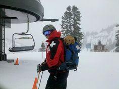 Ski Patrol puppy in training. ♥ Alpine Meadows, Lake Tahoe, CA.
