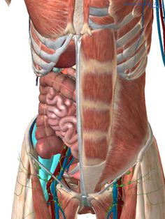 Psoas… release me, let me go!   The Sports Physio