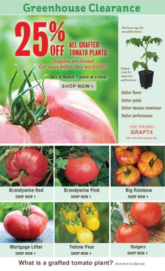 Burpee's Tomato Plant Greenhouse Clearance - 25% Off Grafted Tomatoes & More is going on now.