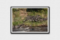 Lioness chasing wildebeest, photography, wall decor, home decoration, animal photo, wall art, wildlife photography, digital download