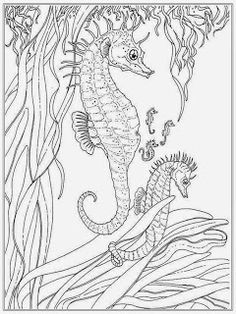 sea horse adult free coloring pages - Realistic Seahorse Coloring Pages