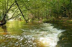 Poland - Roztoczańskie szumy. Roztocze to zielona kraina, ciągnąca się prawie 180-kilometrowym pasmem niewysokich wzgórz i wzniesień od Kraśnika do Lwowa. Warto się wybrać na wycieczkę szlakiem szumów. Słynne szumy to malownicze progi skalne na przełomach roztoczańskich rzek ułożone niczym schody, z których spada woda. W rezerwacie krajobrazowym Czartowe Pole na odcinku około 400 metrów na rzece Sopot znajdują się aż 24 szumiące wodą progi.