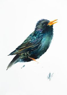 Buy Starling, Watercolour by Andrzej Rabiega on Artfinder. Discover thousands of other original paintings, prints, sculptures and photography from independent artists.