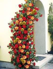 kletterrosen auf pinterest clematis englische rosen und gartenlauben. Black Bedroom Furniture Sets. Home Design Ideas