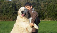 Willow and Ethan Labrador Retriever, Dogs, Animals, Labrador Retrievers, Animales, Animaux, Pet Dogs, Doggies, Animal