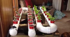 Easily Grow Organic Veggies & Fish At Home – A Simple Aquaponic System