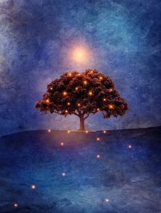 Energy & lights by Viviana González