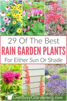 Choosing the best plants for a rain garden can be hard. Learn what to look for, and get tons of options for sun or shade on this rain garden plants list. Sun Plants, Shade Plants, Cool Plants, Plants For Garden, Front Yard Plants, Flowering Plants, Shade Garden, Rain Garden Design, Formal Garden Design