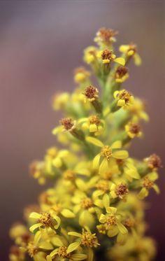 2012 Pentax Spotmatic - Volna-9 heinäk_017 Explore, Flowers, Plants, Plant, Royal Icing Flowers, Flower, Florals, Floral, Planets