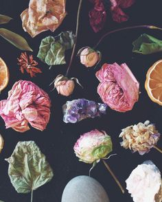 Dried flowers collection.