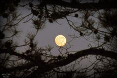 Dagen før fullmåne