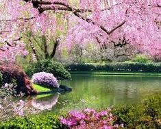 homes, décor, gardens, nature, all things beautiful serene and cozy . Beautiful World, Beautiful Gardens, Beautiful Flowers, Beautiful Places, Beautiful Pictures, Cherry Blossom Tree, Blossom Trees, Pink Blossom, Image Zen