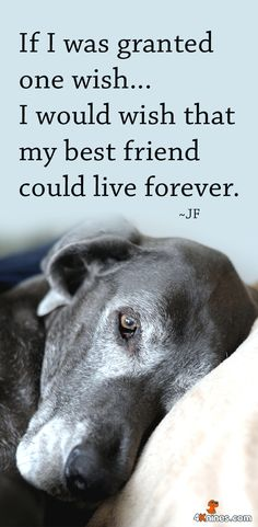 National Pet Memorial Day Lets Take Time To Reminisce And Honor Our Beloved Dogs Who Have Touched Lives