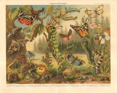 1910 Protecting Mechanism of Insects by CabinetOfTreasures on Etsy, $24.95