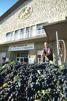 Livraison de raisin à la cave coopérative de Saint Georges d'Orques.