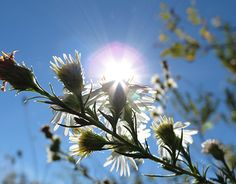 """Check out new work on my @Behance portfolio: """"Sunshine and Flowers"""" http://be.net/gallery/33226891/Sunshine-and-Flowers"""