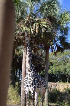 Disney Pictures, Animal Kingdom, Giraffe, World, Animals, Disney Images, Felt Giraffe, Animales, Animaux