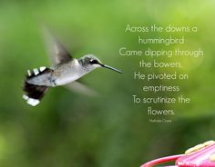 With a Grateful Prayer and a Thankful Heart: Hummingbirds and feeders