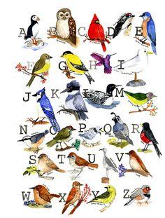Bird Alphabet Sampler Nursery and Home Decor for Bird Lovers- 11x14 print