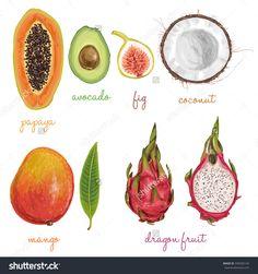 Delicious exotic hand drawn vecto fruits apple, art, asia, avocado, background, carambola, coconut, collection, diet, dragon, drawing, duku, durian, exotic, food, fresh, fruit, grape, green, hand, healthy, illustration, isolated, juicy, kumquat, leaf, lemon, litchi, longkong, mango, mangosteen, natural, nature, orange, organic, painting, papaya, pitaya, set, sketch, starfruit, summer, thailand, tropical, vector, vegetarian, vitamin, watercolor, white