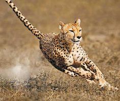 fotografias de los animales en su habitat mas impresionantes - Buscar con Google