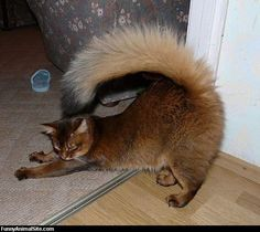 Crazy tail!!!